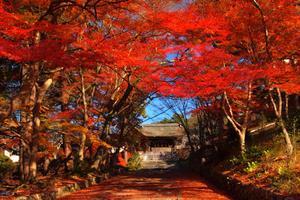 京都駅を起点に洛東・東山の紅葉名勝めぐり