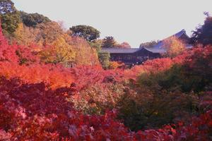 狭~く深~く♪紅葉を楽しむ京都、東福寺