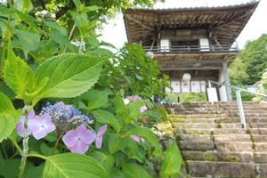 あじさいの山寺、三光寺と古田紹欽記念館