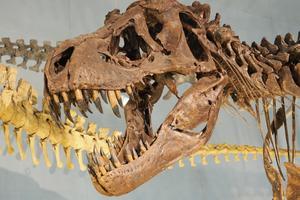 【家族で叫ぼう!】恐竜好き集まれ、1日まるごとジュラシックワールド