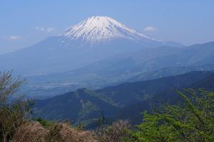 [神奈川県山北] 大野山登山で日頃の運動不足解消でも♪