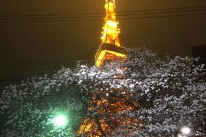 花見の季節に桜越しの東京タワーを眺めながら食事デートをしたい!