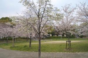 大阪の春を探しに行こう