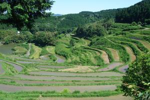 日本一の面積を誇る 岡山の棚田を見にいこう