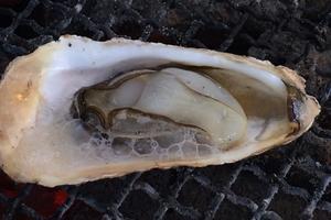 関西屈指の牡蠣生産地「赤穂・坂越(さこし)」で牡蠣と温泉を楽しもう!