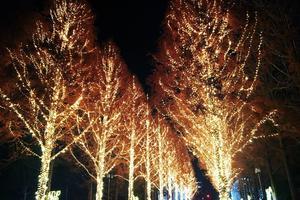 冬の夜に京都デート