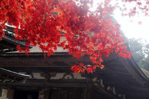 紅葉&秘仏公開♡湖東三山と周辺の社寺