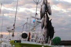 勝浦漁港のマグロの水揚げ