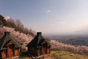 彼方を眺める桜の公園と、入園フリーの動物園!