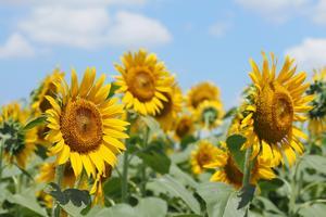 《随時更新》お花好き、カメラ女子も楽しめる、神奈川で花めぐり♪