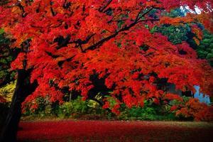 バラと紅葉と絶品ビストロの駒込散歩