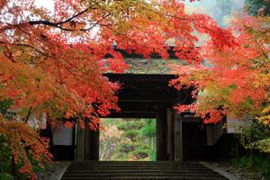 ・南木曽の秋・