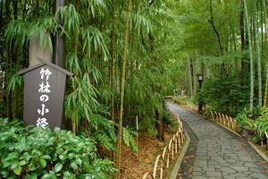 嵐山ぶらり😚