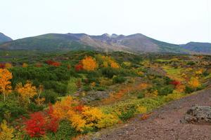 秋の美瑛を満喫