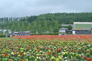 *半日でまわれる、花咲く富良野のドライブコース*
