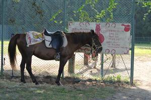 初めての乗馬体験!軽井沢ドライブへGO!GO!