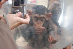 はじめての旭山動物園&富良野観光