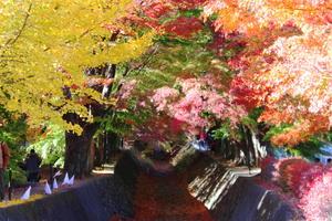 富士山・山梨側周辺の紅葉を散策しよう