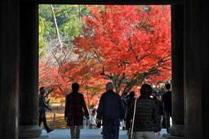 紅葉を求めて南禅寺とその周辺をブラ散歩