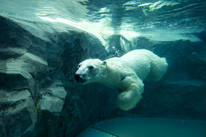 地元民オススメ 旭山動物園と一緒に行きたい周辺スポット