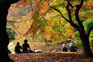 東京公園シリーズ