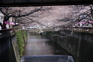 春のおなごの桜祭り