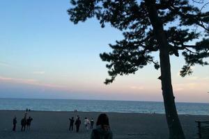 【静岡】地元っ子のおすすめ巡り