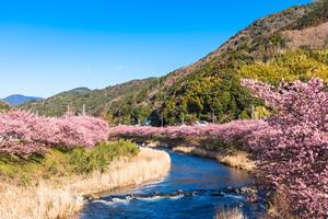 伊東温泉♨️からの河津桜を見に行こう🌸