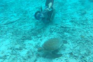 日帰り沖縄 離島  国立公園慶良間諸島 座間味島 むりやり息抜き 海亀と温泉の旅