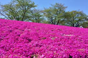ピクニックにデートに…公園でのんびりっ♡ 東京のオススメ公園特集