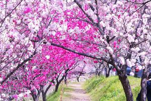 愛犬と南信州 春の旅