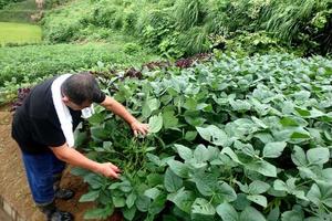 新潟の農家民宿♡まるで実家がふえたような心落ち着く時間を過ごすほっと旅