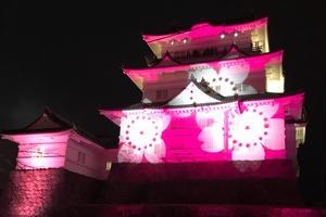 [小田原]冬桜🌸イルミネーションとフレンチ🇫🇷回転寿司🍣