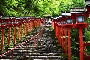紫陽花と青もみじ in 京都