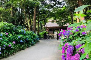 広島からぶらり紫陽花見物+寄り道神社(下道ドライブ)