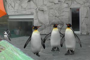 雨の富良野旅行1日目 (旭山動物園)雨