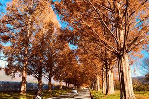 琵琶湖周辺ドライブ旅行
