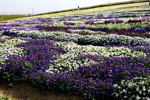 【安曇野 穂高神宮】御朱印と花と手拭いと