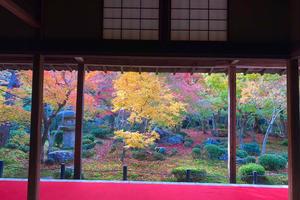 【京都】紅葉をめぐる旅。