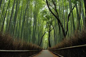 京都嵐山〜竹林を満喫〜