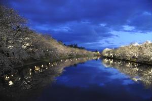桜の名所は日本全国数あれど 夜桜の美しさと お岩木山とのコラボは絶景
