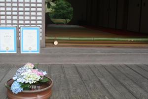 鎌倉紫陽花の名所、寺院3カ所一気巡り