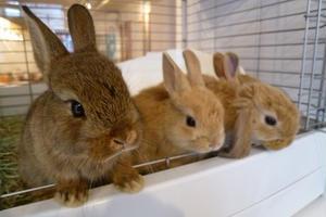 下北沢でウサギを愛でる日。