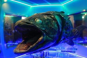 沼津でお魚だらけのおでかけ
