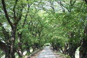 マイナスイオンを求めて、京都・八幡市をサイクリングでぶらり旅。