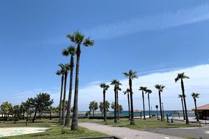 当日の朝思い立っても大丈夫!サンビーチ一ツ葉で過ごす、のんびり日帰りBBQ