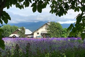 【1泊2日】星が綺麗なキャンプ場に泊まる🏕ラベンダーの町・富良野へ