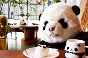 《台湾•台北編》可愛いパンダに癒されよう🐼現地CAと巡る台北1泊2日旅!