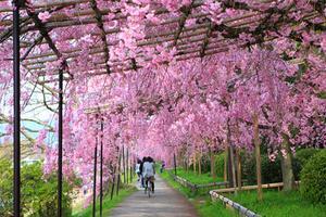 京都 賀茂川河畔を散策する大人旅
