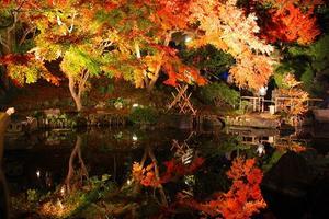 紅葉の鎌倉できゅんな癒しのひととき♪